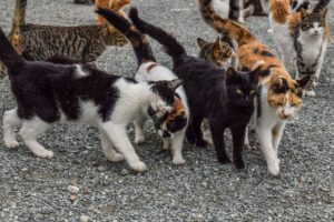 We could learn a thing or two from feral cats